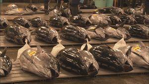食卓の魚高騰 海の資源をどう守る