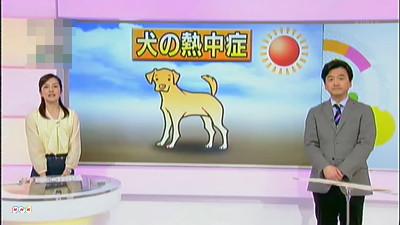 犬の熱中症、今から注意!
