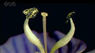 花の中のおしべとめしべ