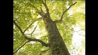 森林のたいせつさを知る