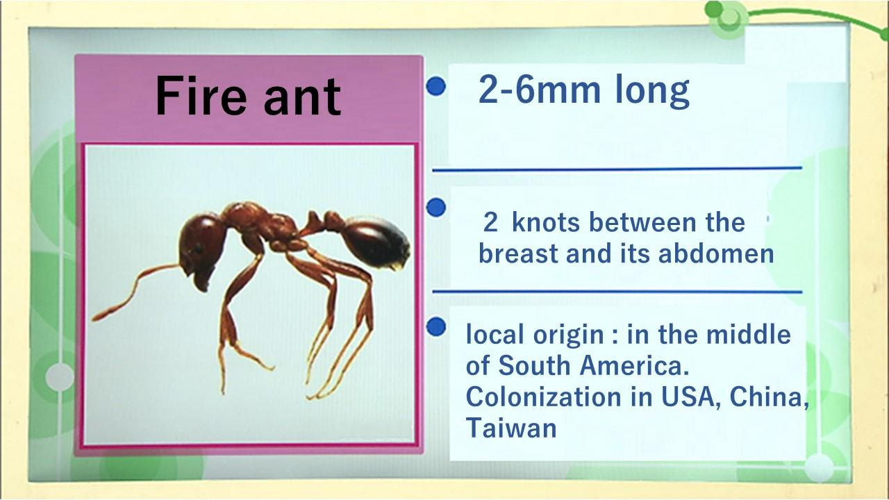 Anaphylactic shock occurs even with fire ant stings
