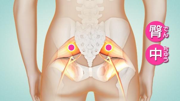 お尻の筋肉のツボ「臀中(でんちゅう)」