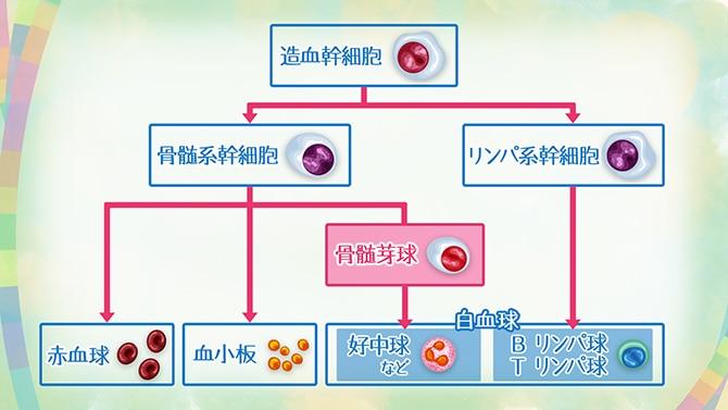 ニキビ 白血病 初期症状