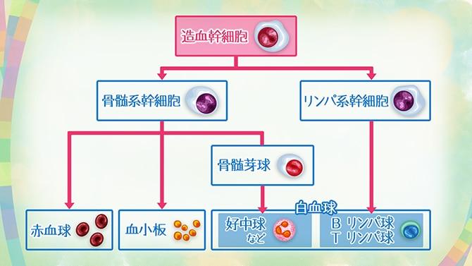 多い 10000 白血球