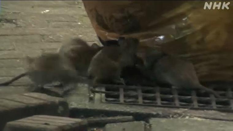 ネズミ 駆除 店舗